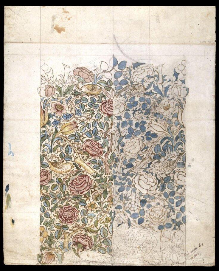 Rose top image