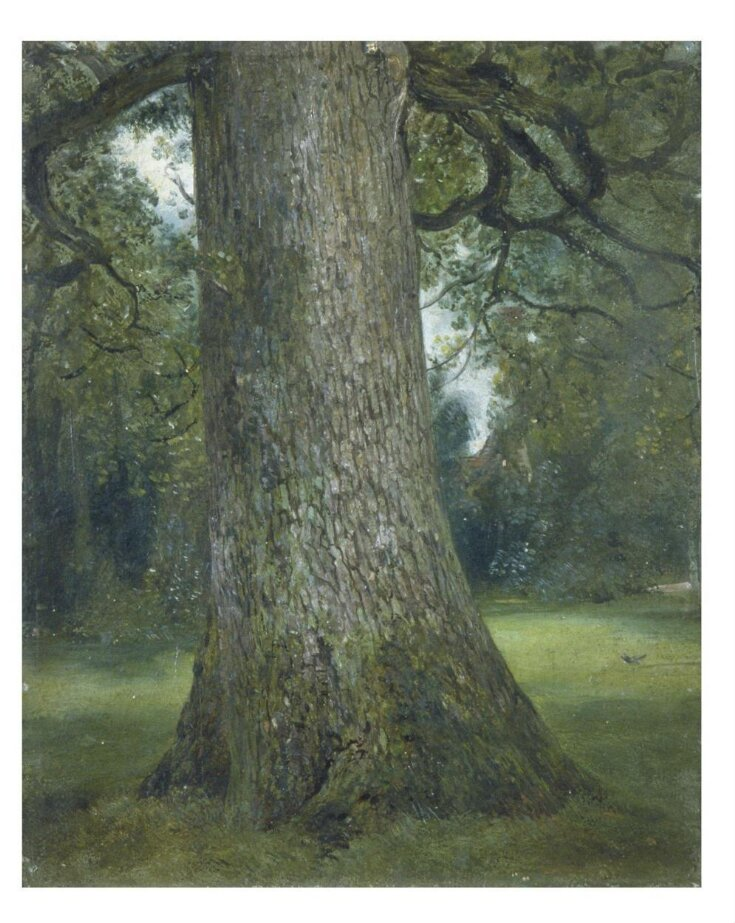 Study of the Trunk of an Elm Tree top image