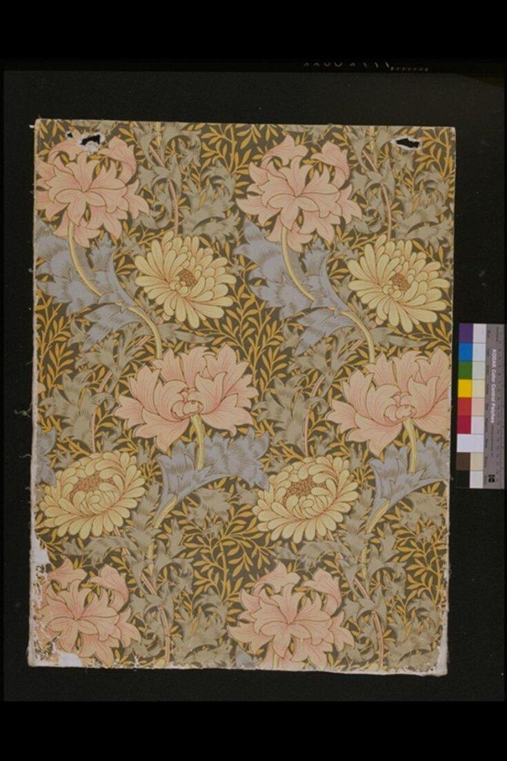 Chrysanthemum top image