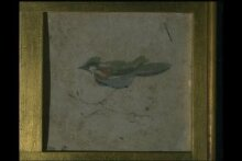 Bird on a branch thumbnail 1