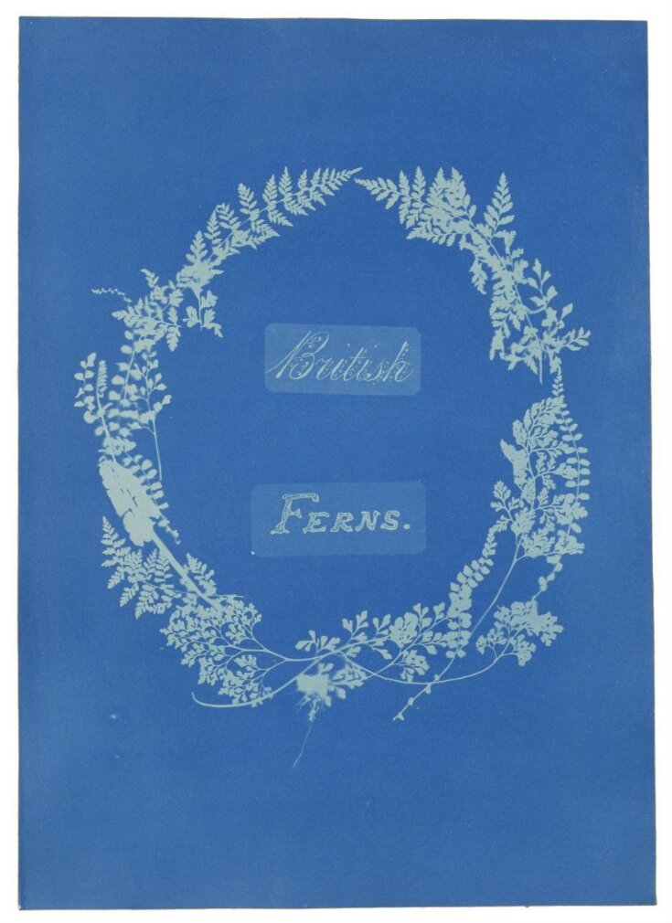 Title page of British and Foreign Flowering Plants and Ferns top image