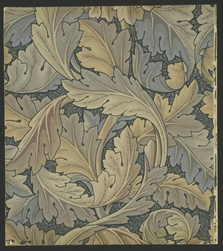 Acanthus top image