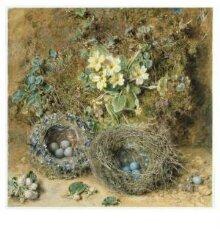 Primroses and Bird's Nests thumbnail 1
