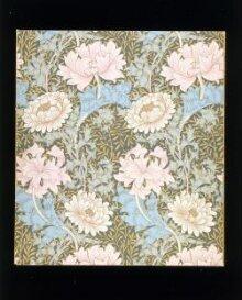 Chrysanthemum thumbnail 1