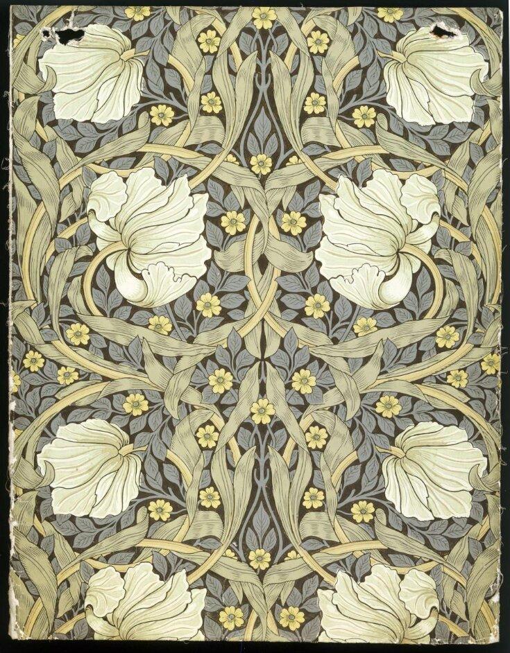 Pimpernel top image