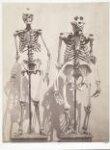 Skeleton of Man and of the Male Gorilla (Troglodytes Gorilla) thumbnail 2