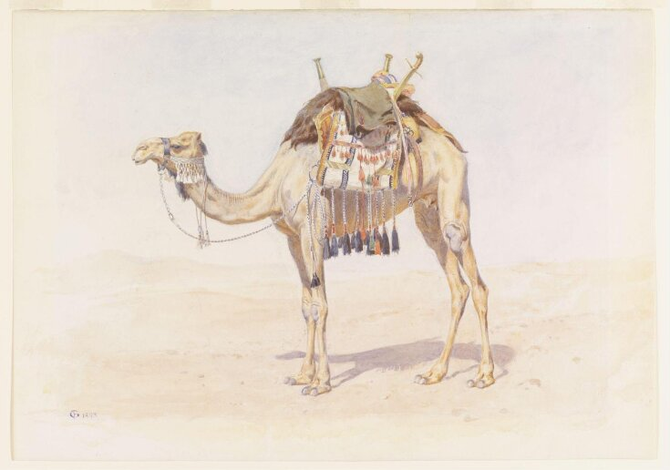 Female Riding Camel top image