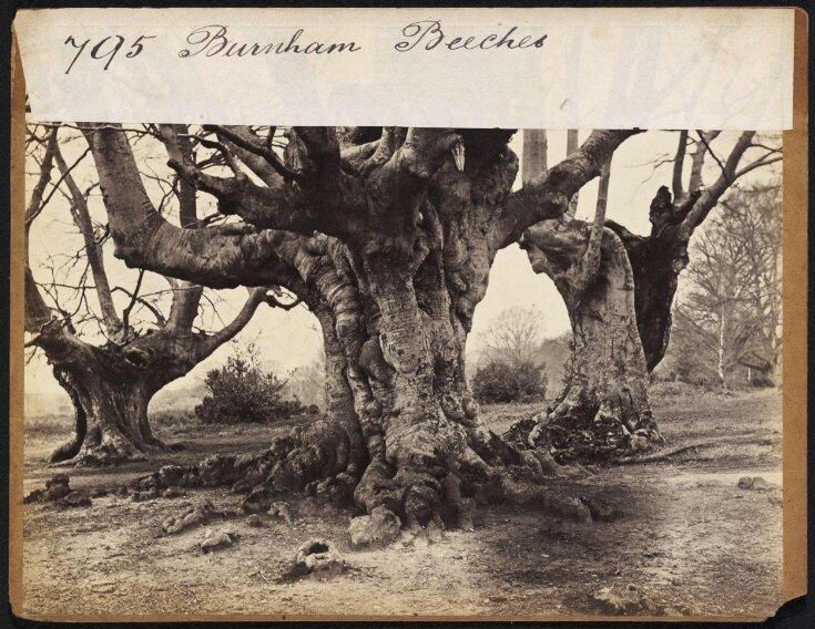 Burnham Beeches top image