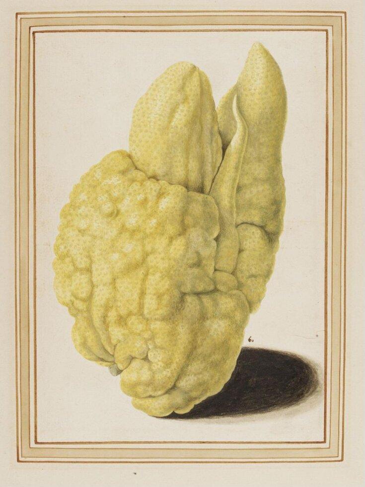 Citron top image
