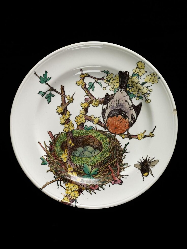 Naturalist series top image