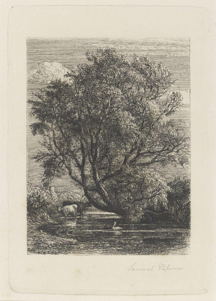 The Willow top image