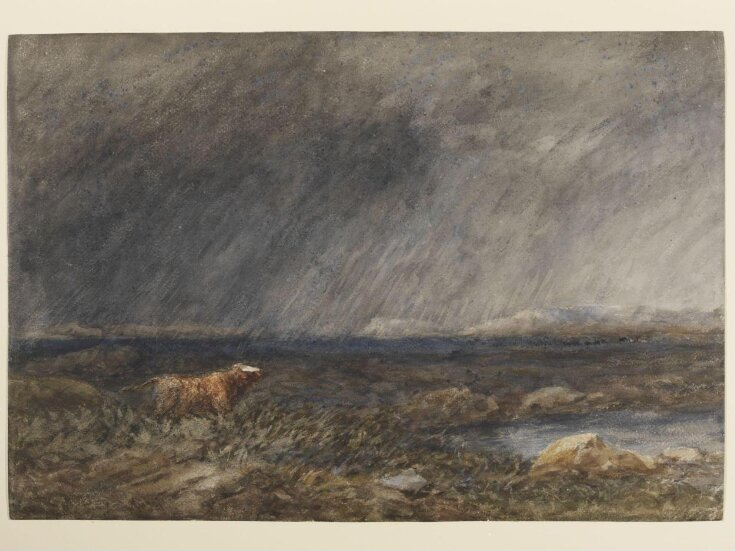 The Challenge: A Bull in a Storm on a Moor top image