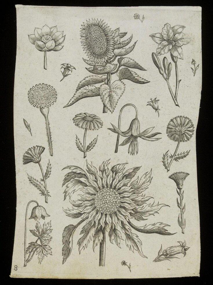 Florilegium top image