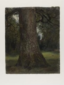 Study of the Trunk of an Elm Tree thumbnail 1
