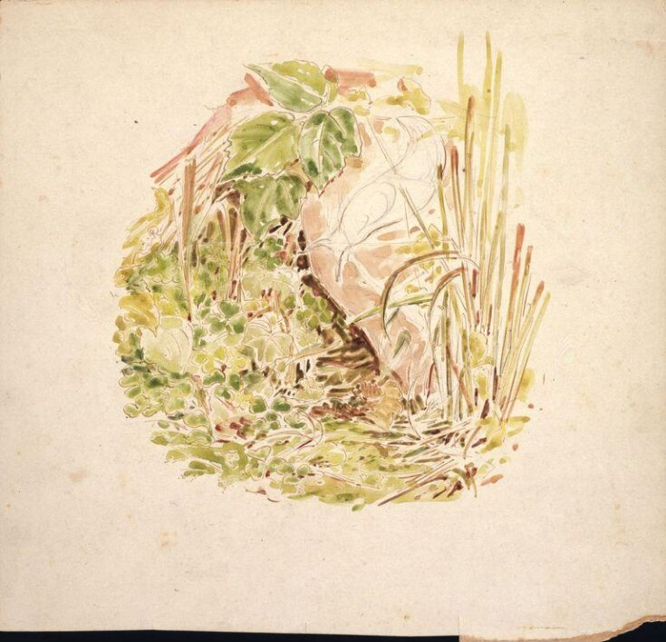 Study of undergrowth with grasses, clover and a snail  top image