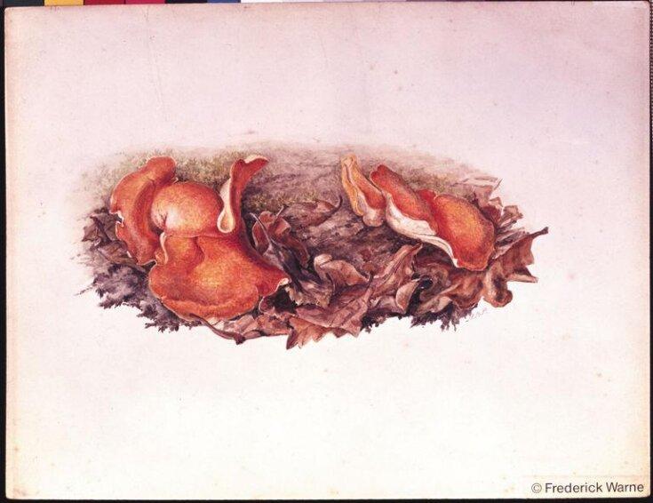 Orange fungi (Aleuria aurantia) growing amongst fallen leaves top image