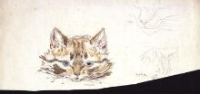 Studies of a cat thumbnail 1