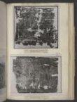 Printed Linen thumbnail 2