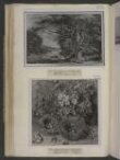 Primroses and Bird's Nests thumbnail 2