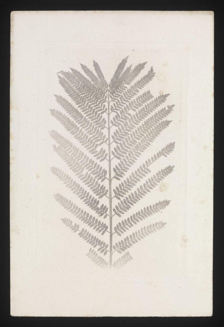 """Symmetrical fern, with cloth """"halftone"""" screen top image"""
