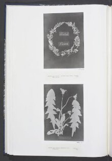 Title page of British and Foreign Flowering Plants and Ferns thumbnail 1