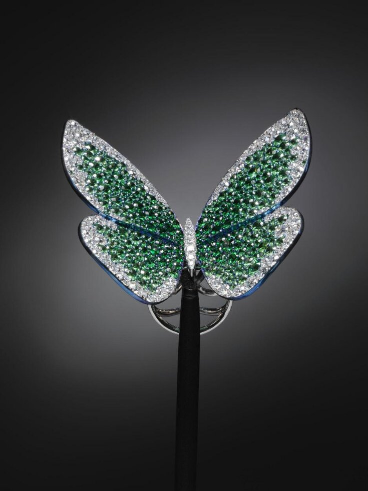 Papillon top image
