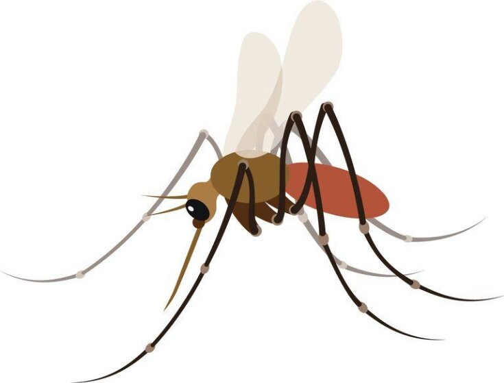 Mosquito Emoji in .Png Format top image