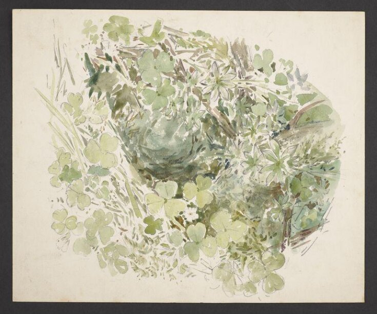 Study of undergrowth with grasses and clover top image