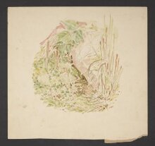 Study of undergrowth with grasses, clover and a snail  thumbnail 1