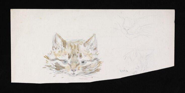 Studies of a cat top image